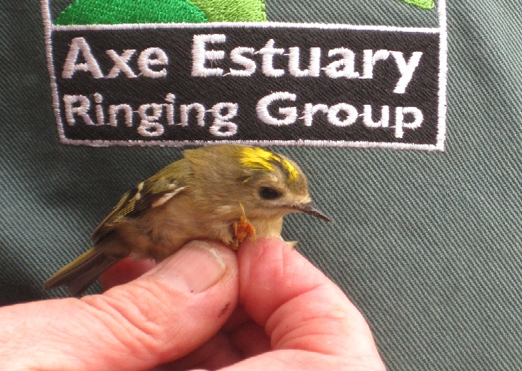 Bird ringing demonstration 9 March