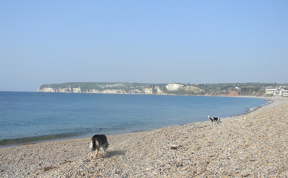Seaton's beach management plan aims to ensure the town's coastal defences are capable of proving protection against flood and erosion