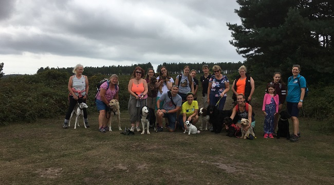 Walkers and their dogs celebrate Devon Loves Dogs' first birthday