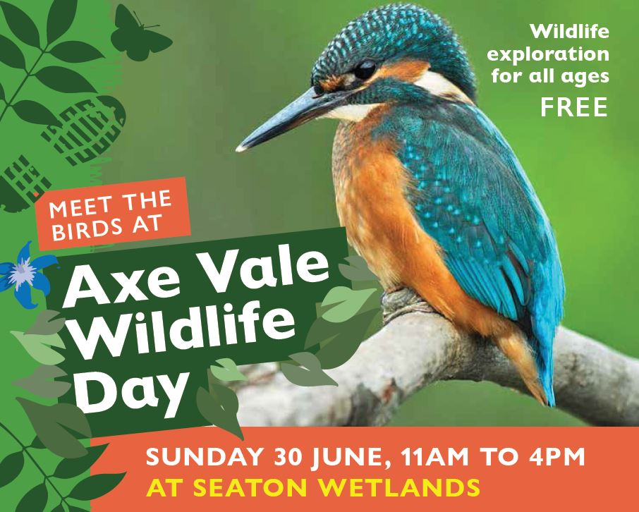 Axe Vale Wildlife Day with Axe Vale & District Conservation Society