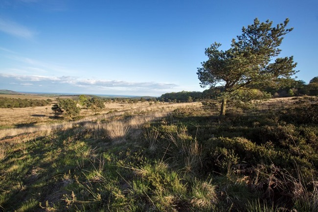 Have your say on proposals for East Devon's Pebblebed Heaths