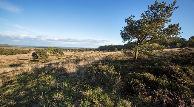 Green light for changes on East Devon's Pebblebed Heaths
