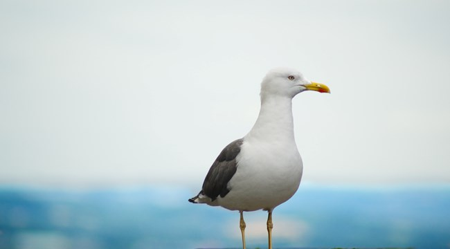 One of the PSPOs includes a ban on feeding seagulls on the beaches and seafronts
